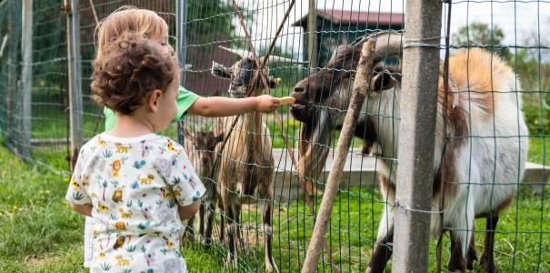 animali fattoria didattica